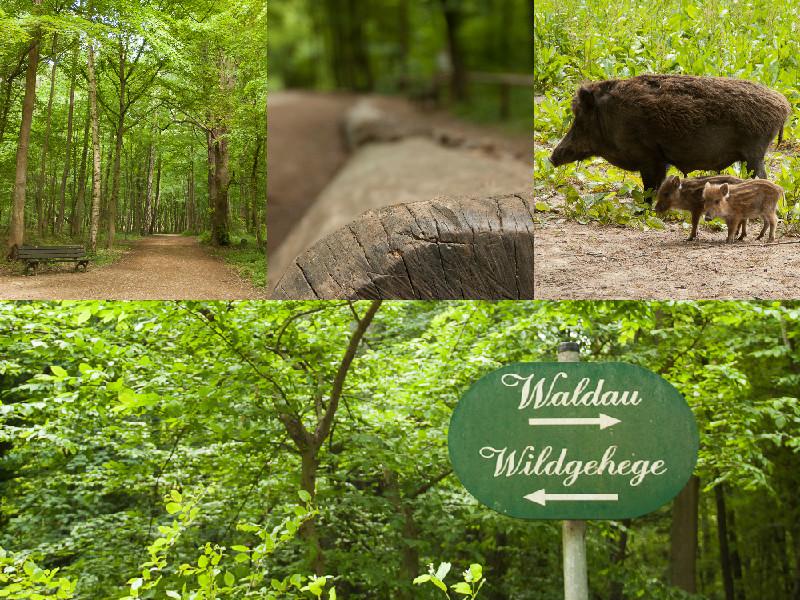 20150519Lichtemomente-Waldau Wildgehege