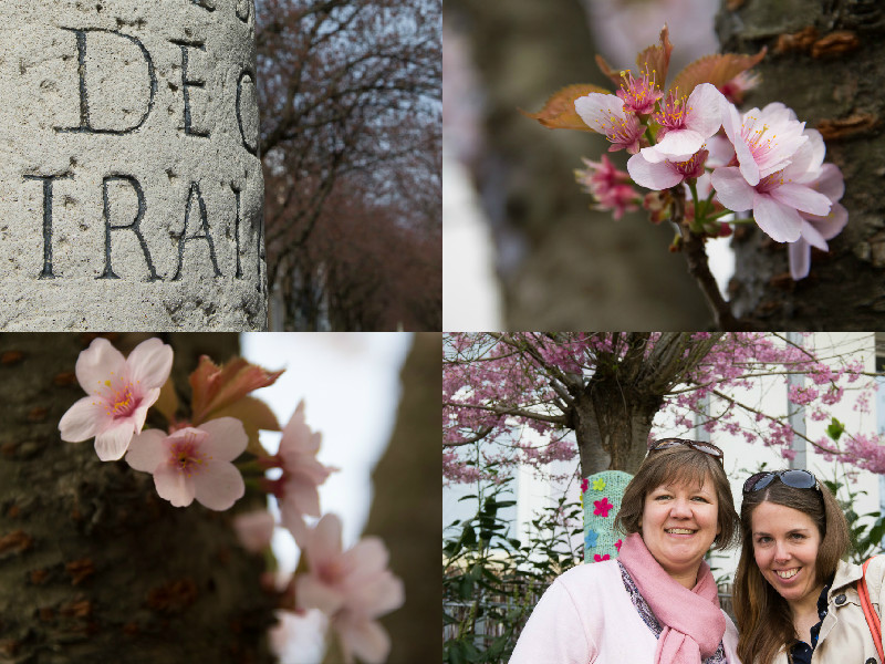 Kirschblüte2015