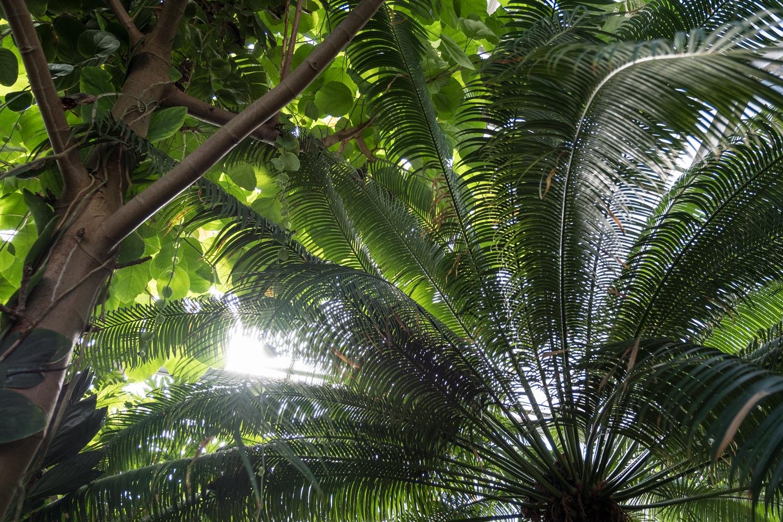 SH_Botanischer_Garten_Bonn_002